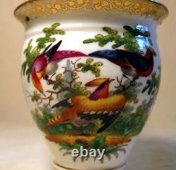 Antique Richard Klemm Porcelain Cup & Saucer Exotic Birds Insects Hand Painted